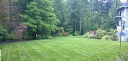Yard and lawn care services